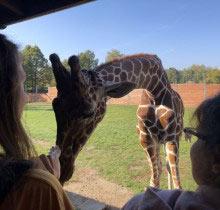 2018_10_zoo_safari_02
